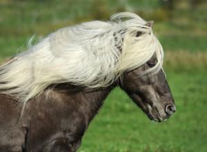 horse-1330704_960_720