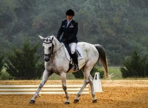 horse-573770_960_720