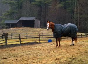 horse-582472_1920