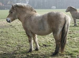 horse-975982_960_720