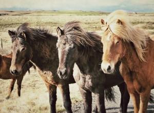 horses-1263136_960_720